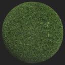 Asset: Grass001