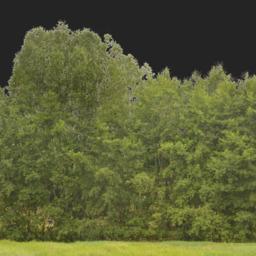 Asset: Backdrop005