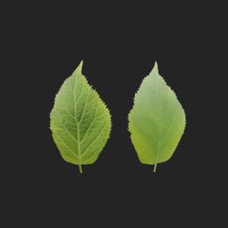 Asset: Leaf001