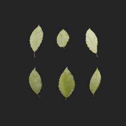 Asset: LeafSet001