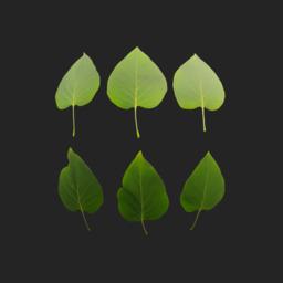 Asset: LeafSet004