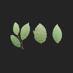 Asset: LeafSet005