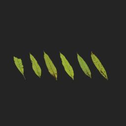 Asset: LeafSet013