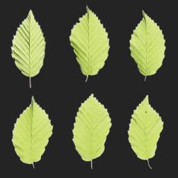 Asset: LeafSet014