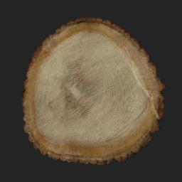 Asset: TreeEnd002