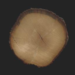 Asset: TreeEnd003