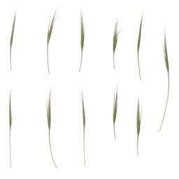 Asset: Foliage004