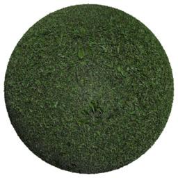 Asset: Grass002