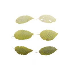 Asset: LeafSet006