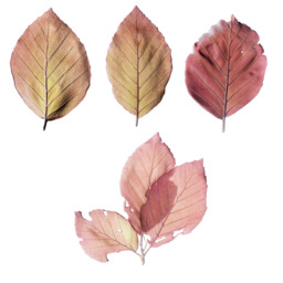 Asset: LeafSet015