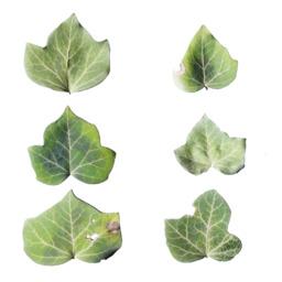 Asset: LeafSet017