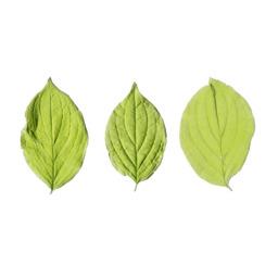 Asset: LeafSet018