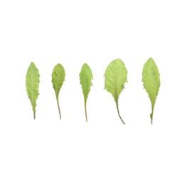 Asset: LeafSet020