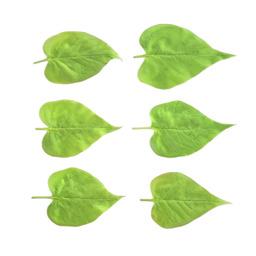Asset: LeafSet023